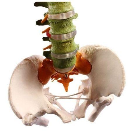 Joustava didaktinen selkäranka