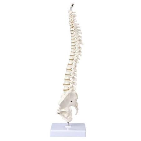 Mini selkäranka