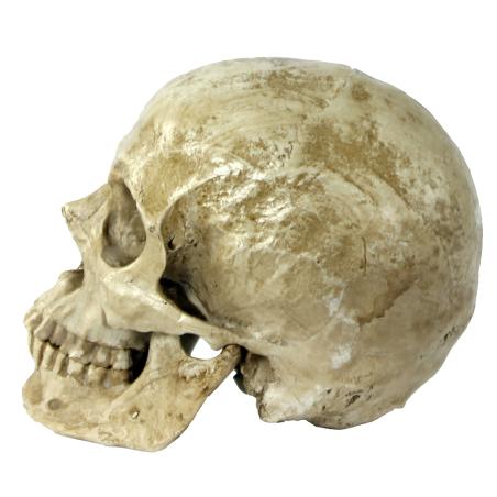 Käsinmaalattu pääkallo (Valkoinen)