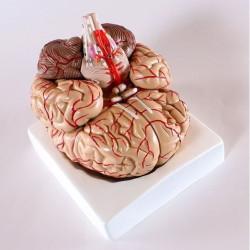 Aivot valtimoilla (9 osaa)