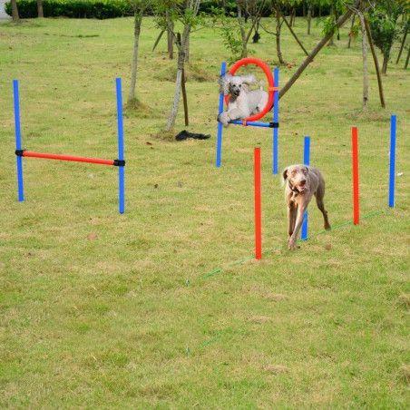 Koiran agility-sarja