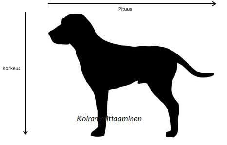 koiran mittaaminen
